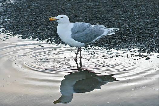 Rick  Monyahan - Wet Feet