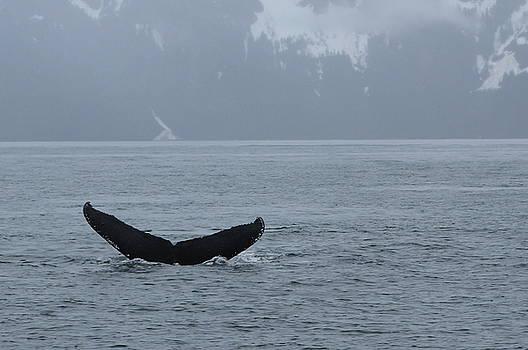Brandy Little - Whale Fluke