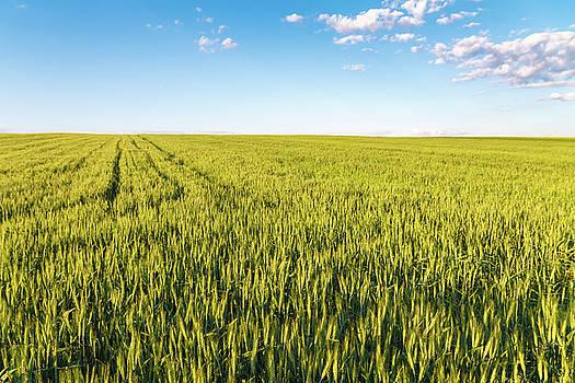 Wheat Field by Cristian Mihaila