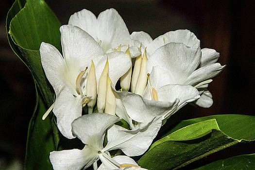 White Flower by James Gay