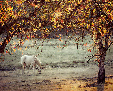 White Ranch Horse by Amy Neal