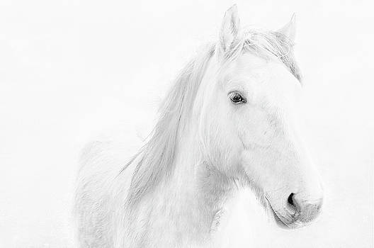 White Horse by Jacqi Elmslie
