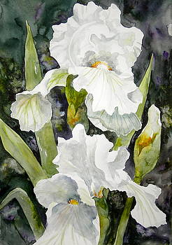 White Iris by Becky Taylor