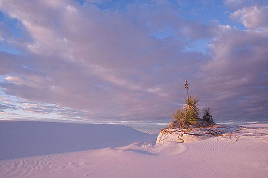 White sands at Sunset by Carolyn Dalessandro