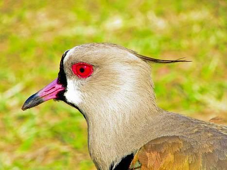Wild Bird by Cesar Vieira