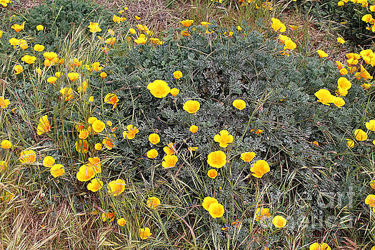 Wild Flowers by Katherine Erickson