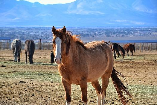 Wild Horse by SoxyGal Photography