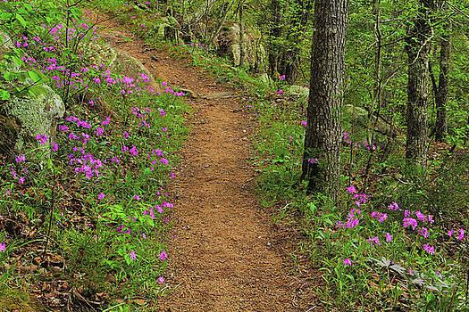 Wild Phlox Along the Trail 3 by Greg Matchick