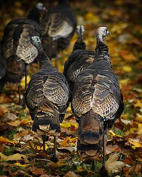 Scott Hovind - Wild Turkey