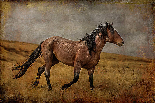 Wild with the Wind by Mary Hone