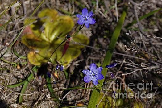 Wildflowers by Cassandra Buckley