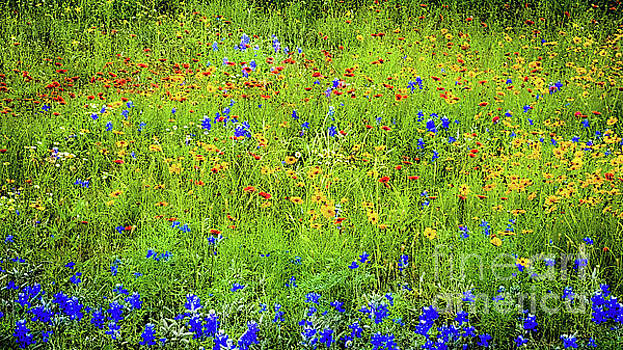 Wildflowers in Bloom by D Davila