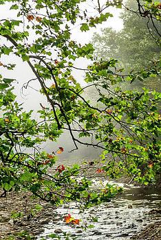 Williams River Mist by Thomas R Fletcher