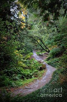Winding Road by Kiana Carr