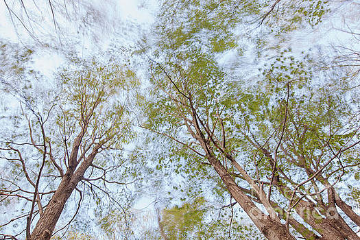 Windy Canopy by Jonathan Welch