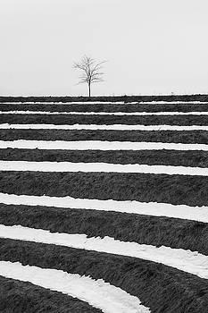 Winter Blues by Davor Zerjav