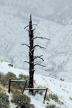 Roland Stanke - Winter Fence line