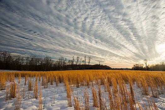 Dana Sohr - Winter Field - Maryland