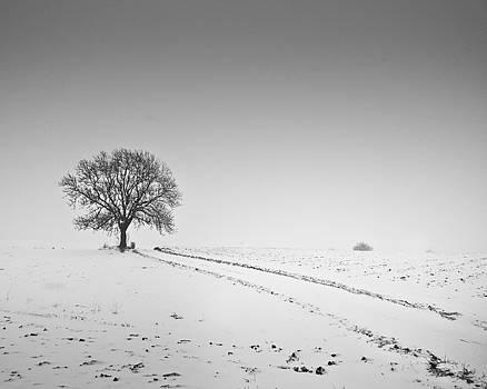 Winter by Gerd Doerfler