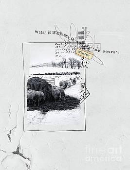 Winter by Gillian Singleton