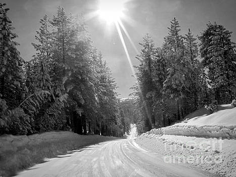 Winter Road by Irina Hays