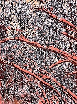 Brenda Plyer - Winter Woods 2
