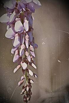 Wisteria Dreams- Fine Art by KayeCee Spain
