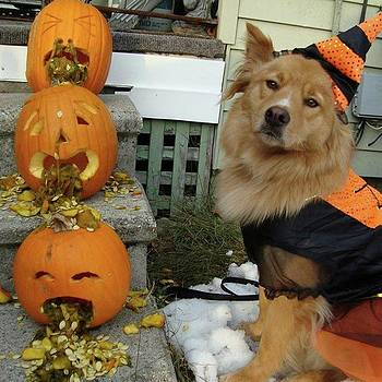 Witch Dog With Barfing Pumpkins by Amanda Richter