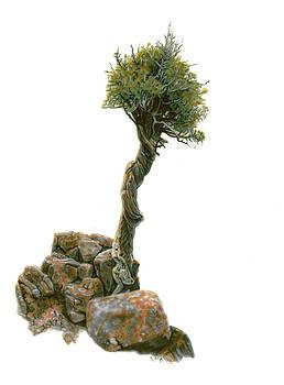 Witch's Tree by Wayne Pruse