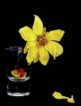 Michalakis Ppalis - Withered lifeless dahlia flower