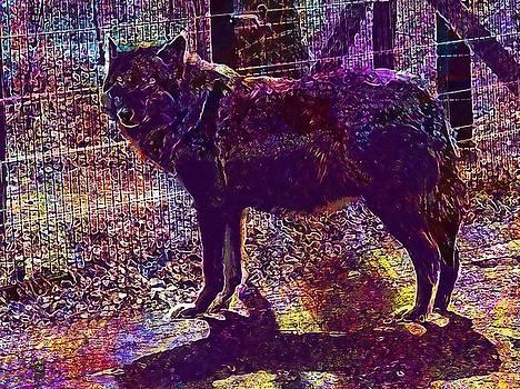 Wolf Wild Carnivores Wildlife Park  by PixBreak Art