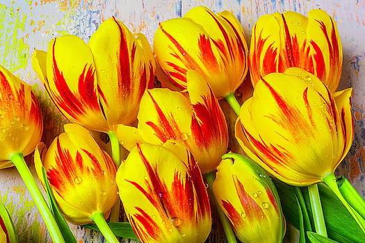 Wonderful Red Yellow Tulips by Garry Gay