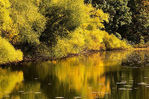 Yellow Glow by Amanda Kiplinger