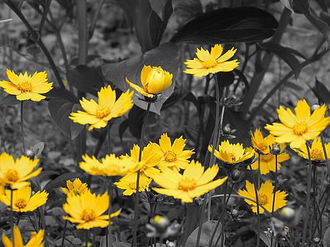 Yellow Lust by Ginger Wemett