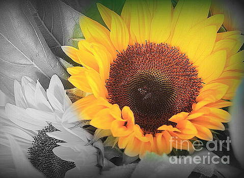 Yellow Sunflower on Black and White by Dora Sofia Caputo Photographic Design and Fine Art