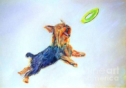 Yorkie, I love Frisbee by Janice Abel