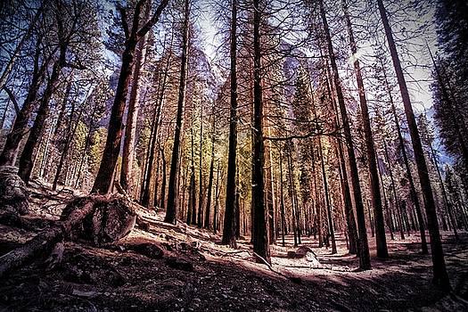 Bonnie Bruno - Yosemite Forest