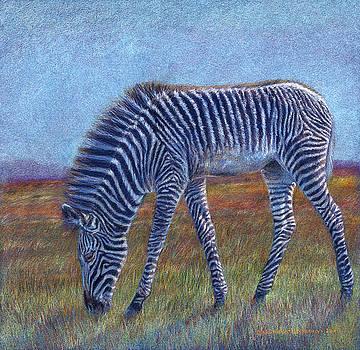 Zebra Foal ... by Svetlana Ledneva-Schukina