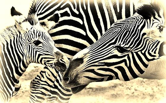 Zebra Mother and Calf Impression by Werner Lehmann