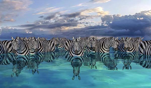 Zebras by Betsy Knapp