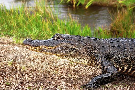 American Alligator by Rich Leighton