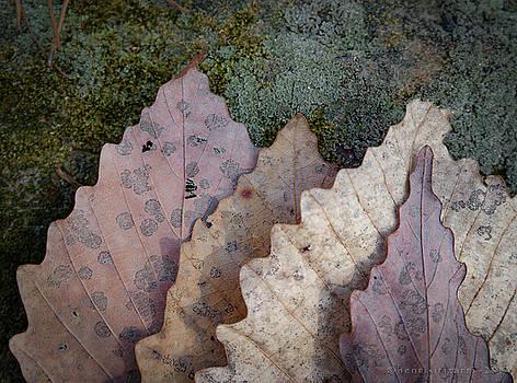 Dried Leaves by Henri Irizarri