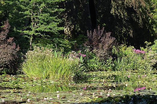 Monet's Water Lilies by Harvey Barrison