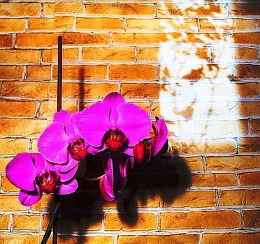 Orchid by Kovats Daniela