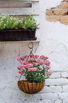 Newnow Photography By Vera Cepic - Pallet ideas for gardening