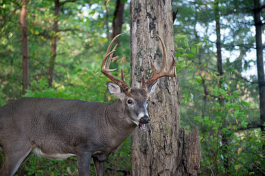 10 Point Buck by Cathie Crow