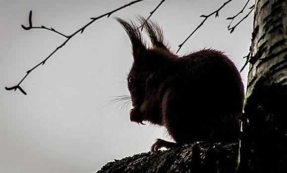 Squirrel by Cesar Vieira