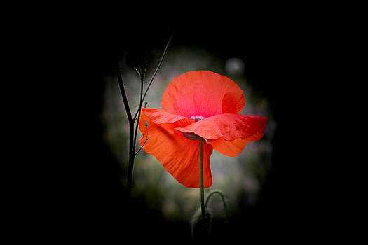 Remembrance by Linda Foakes
