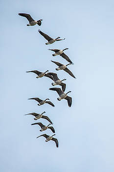 11 Flying Geese by Gary E Snyder