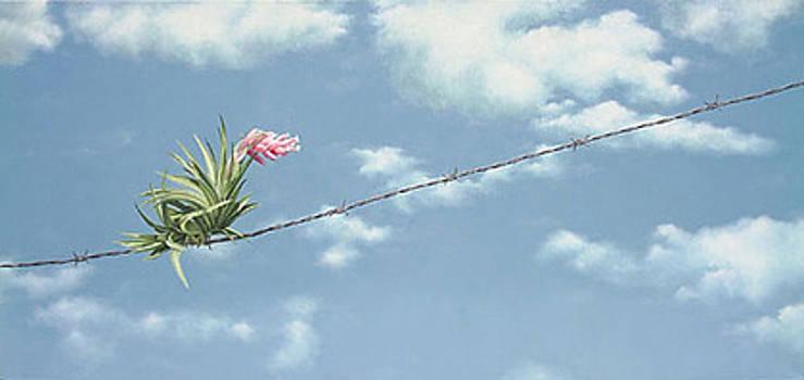 Untitled by Adriana Villagra